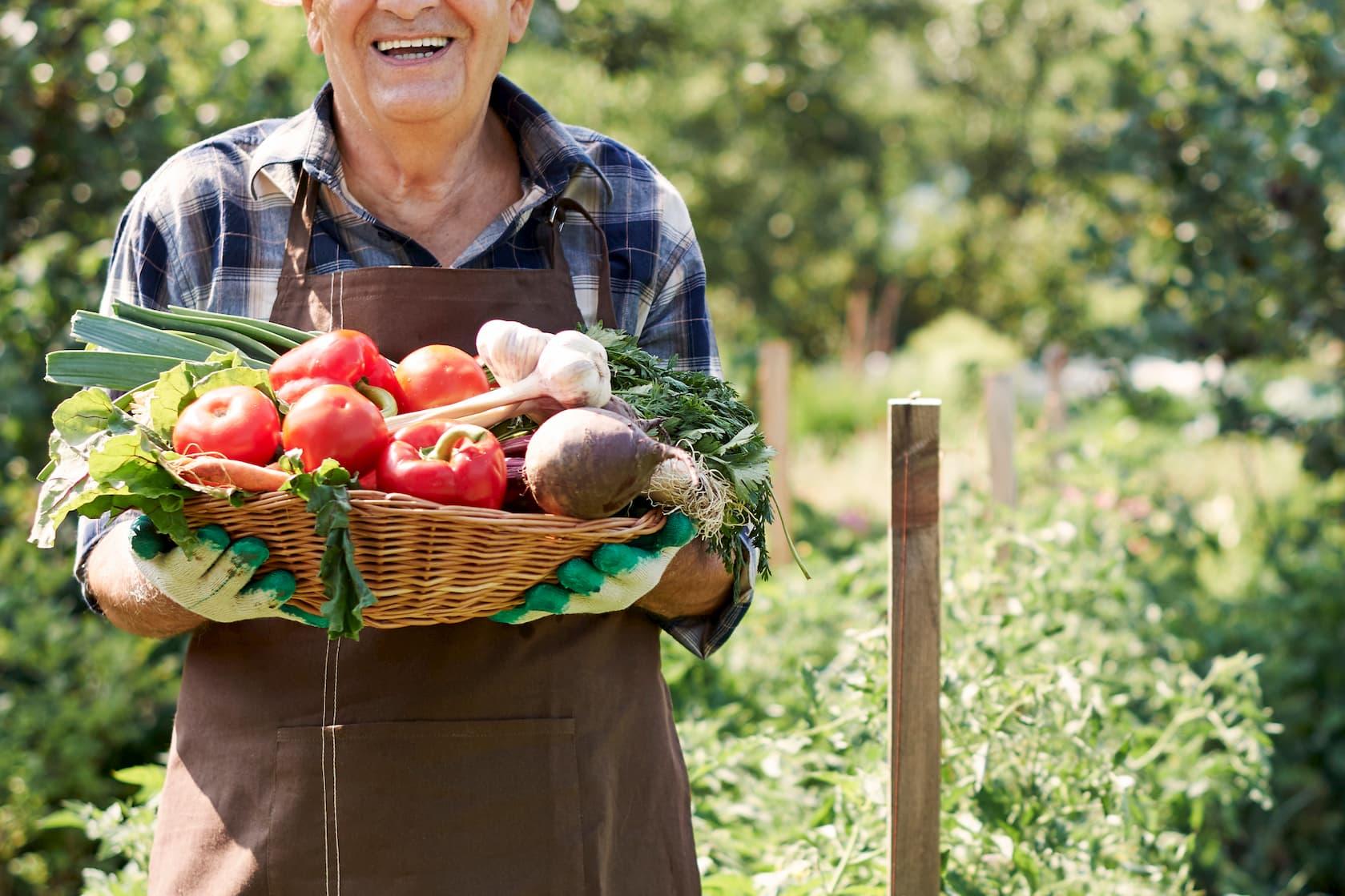 קנייה ישירה מהחקלאי