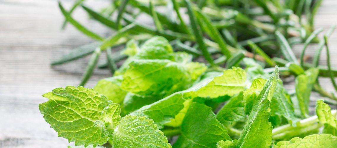 basil-mint-and-rosemary-fresh-green-herbs-laying-5V3Q2U4-1